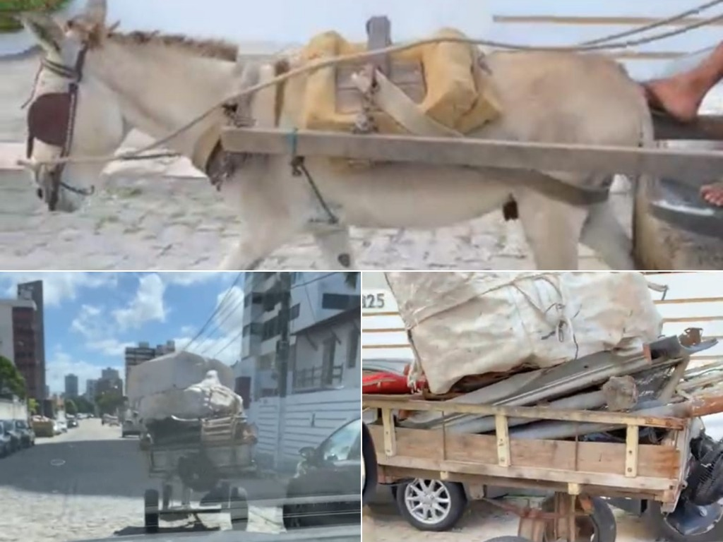 Denúncia: Carroceiro agride animal e ameaça cidadão que presenciou cena; veja vídeo